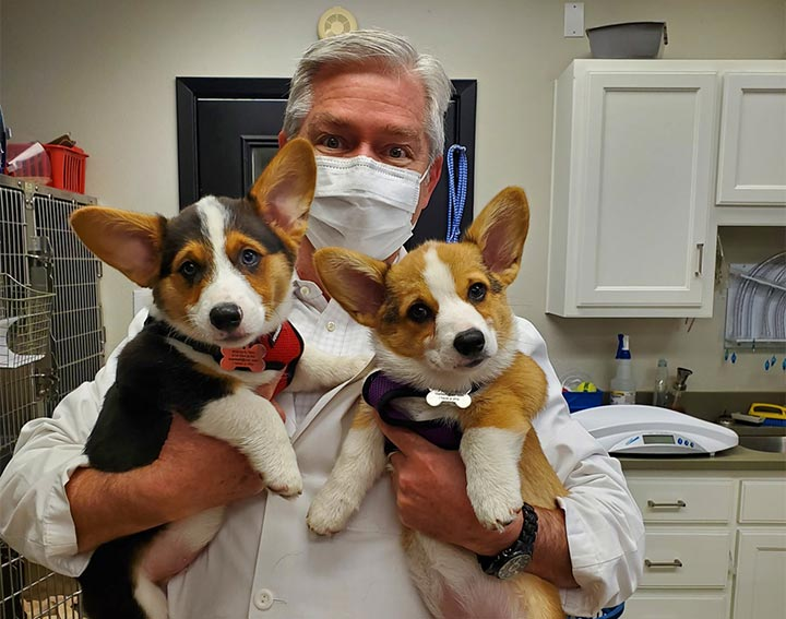 Dog Veterinary Care, Sachse